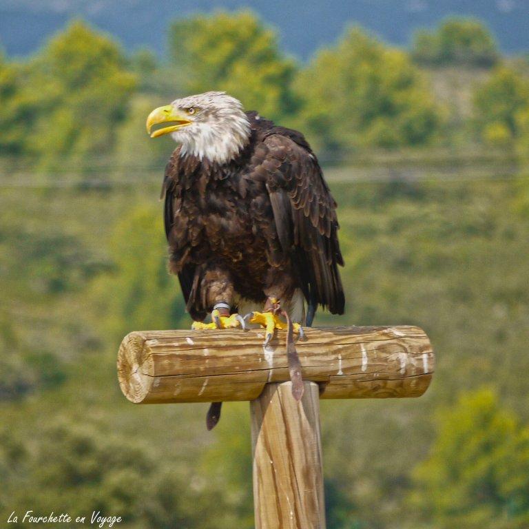 Zoo de la Barden13