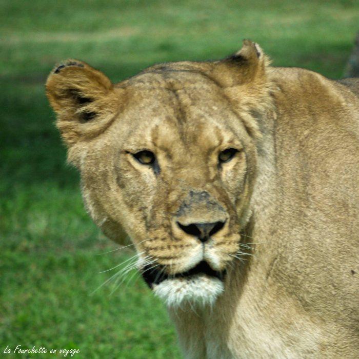Zoo de la Barden17