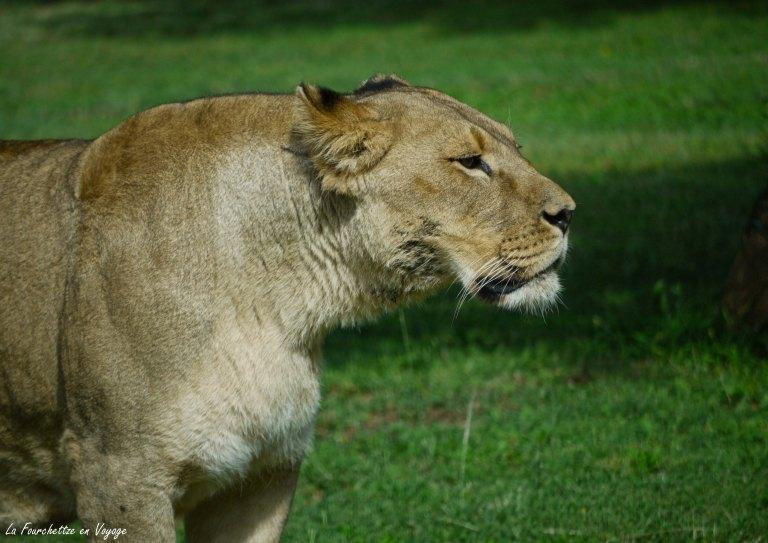 Zoo de la Barden18