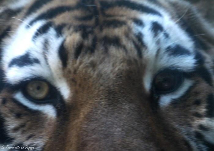 Zoo de la Barden9