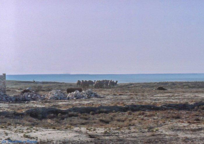 Caspienne 8