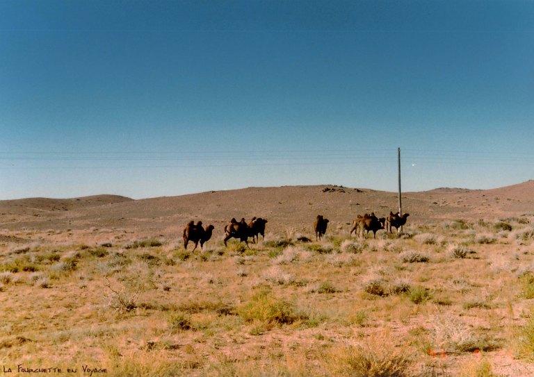 Chameaux errants Mer d'Aral