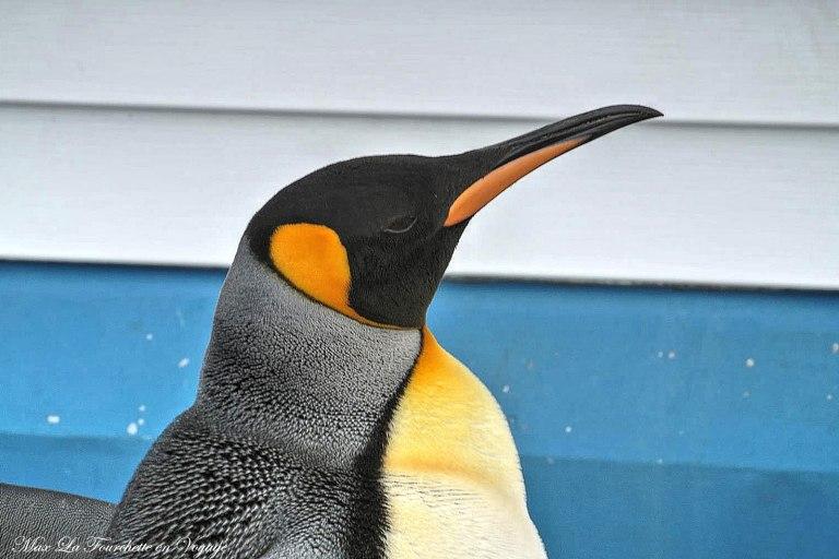 Antarctique HDR15w