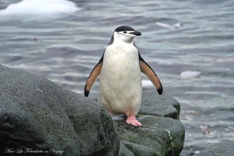 Antarctique HDR23w