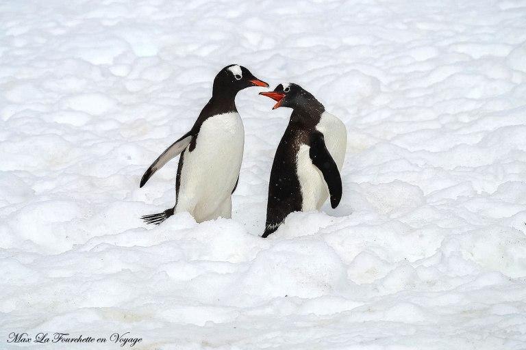 Antarctique HDR31w