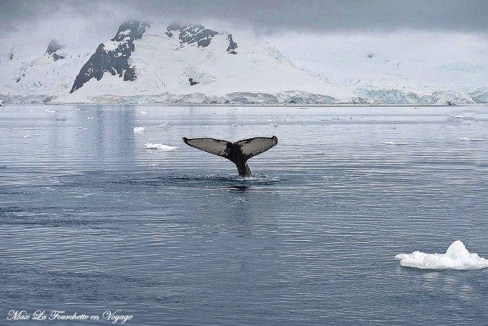 Antarctique HDR34w