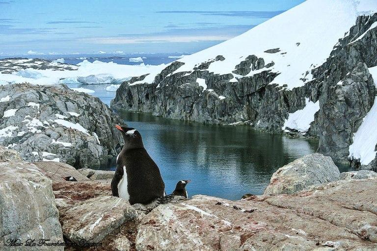 Antarctique HDR40w