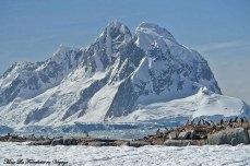 Antarctique colonie de Manchots Adélie