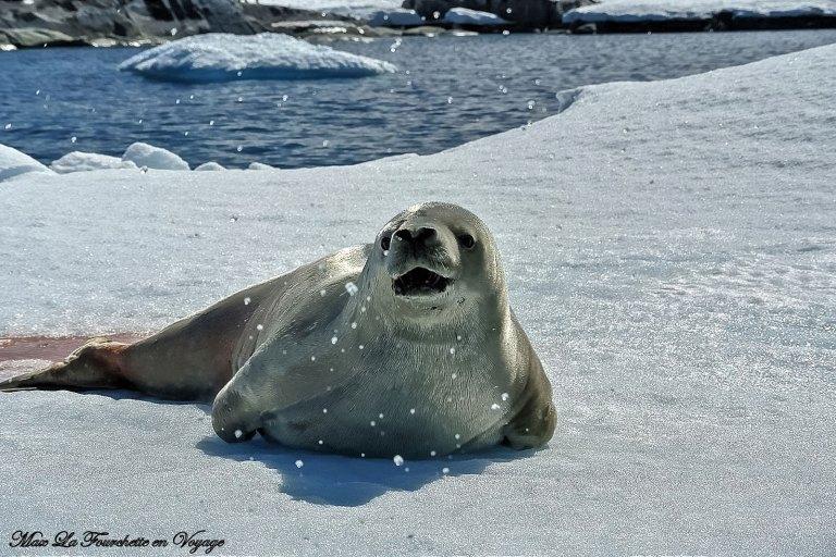 Antarctique HDR45w