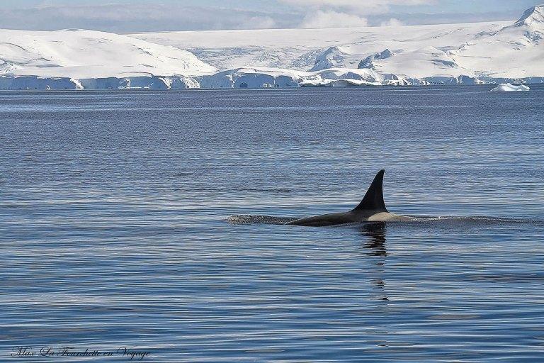 Antarctique HDR9w